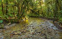 Kaniere Creek
