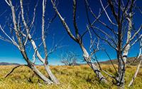 Lake Stream Dead Trees